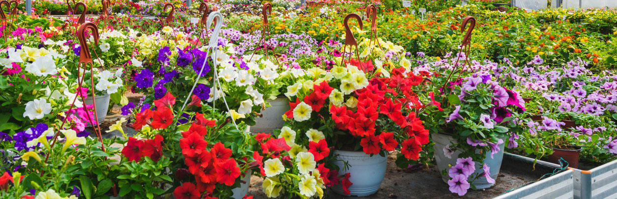 vivaio-tauriaflora